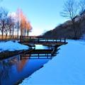 いつもの散歩道 冬