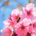 春が来た(^^)