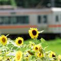Photos: 夏のひととき
