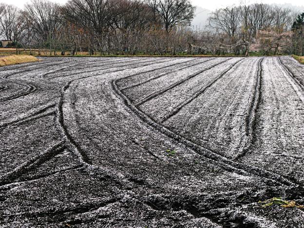 雪のパウダー。