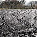 写真: 雪のパウダー。