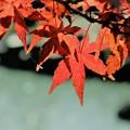 写真: 池の上の紅葉