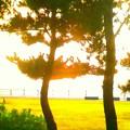 雨上がりのパーク1