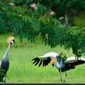 袖ヶ浦公園に迷い込んだ変な鳥 (2)