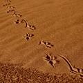写真: 大きな足跡