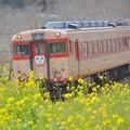 Photos: 春の中