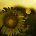 Photos: sun&flower