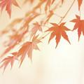 秋色 op.2