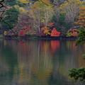 Photos: 静かな紅葉