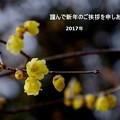 写真: 初春