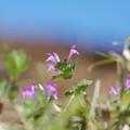 写真: 小さな春♪