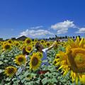Photos: 夏の思い出