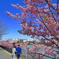 Photos: 春日和