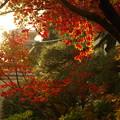 写真: 本土寺 (5)