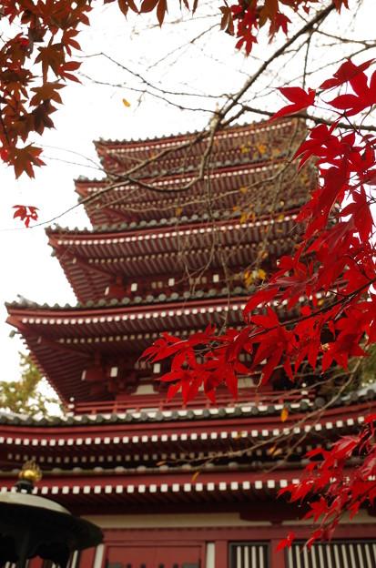 写真: 本土寺 (1)