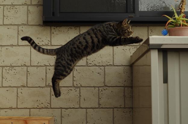 飛び猫 (2)