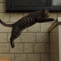 写真: 飛び猫 (2)