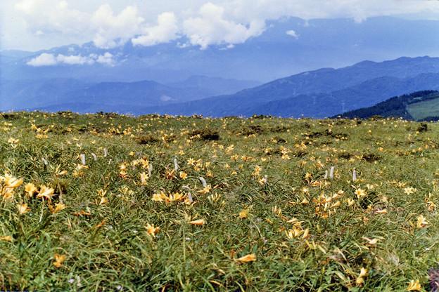 日光キスゲ咲く草原
