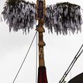 写真: 真木の榊(祇園祭)