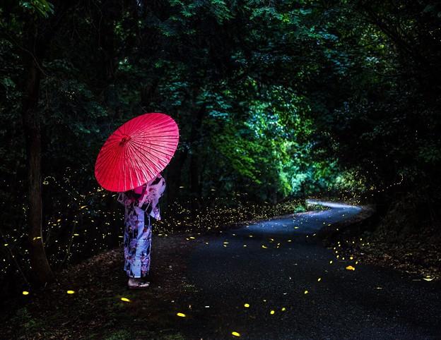 写真: 蛍路