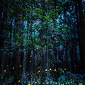 写真: Night in the forest
