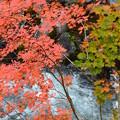 Photos: 溪谷の秋ーB