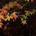 Photos: 青葉から紅葉へと