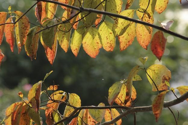 秋のフレーム♪