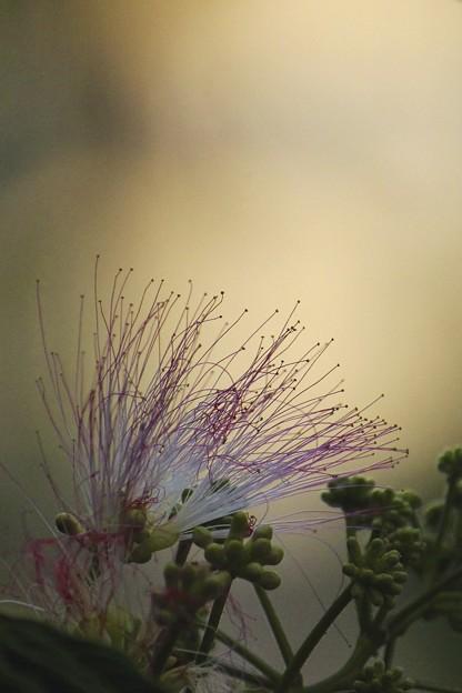 夜の花~♪
