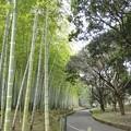 Photos: 別府公園の朝散歩~♪