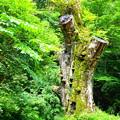 森の守り神 v2