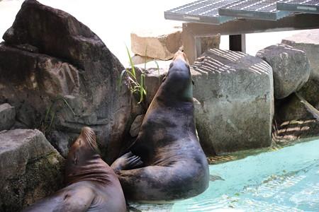 王子動物園1