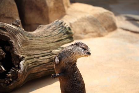 王子動物園19