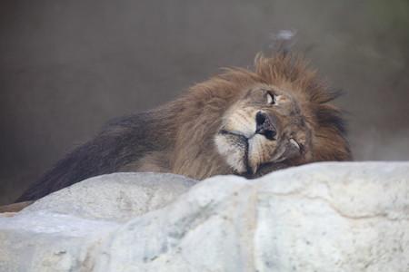 王子動物園24