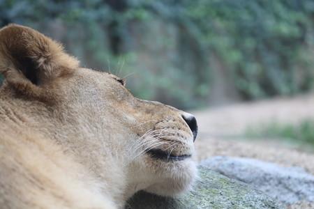 王子動物園33