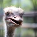 王子動物園54