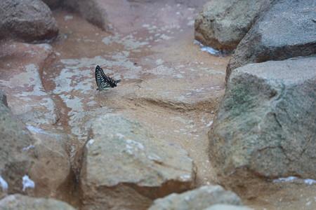 王子動物園55