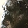 王子動物園56
