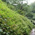 阿弥陀ヶの滝19