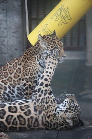 天王寺動物園5
