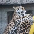 天王寺動物園8