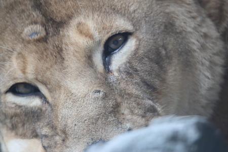 王子動物園10