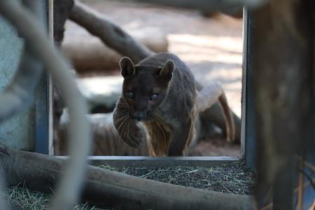上野動物園64