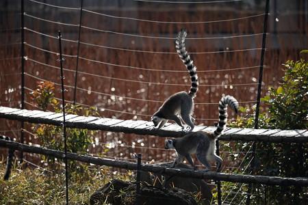 上野動物園83