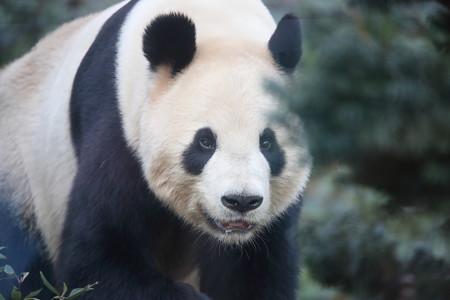 上野動物園99