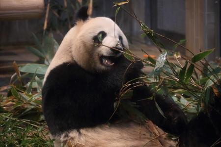 上野動物園101