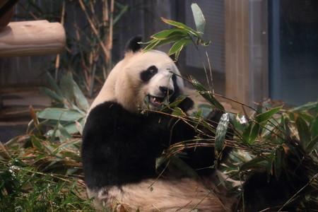 上野動物園102