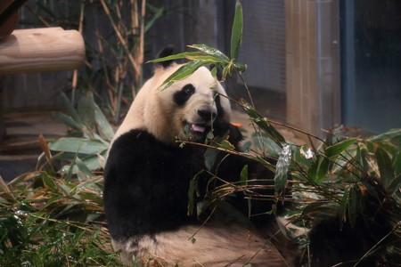 上野動物園103