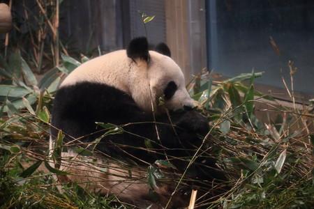 上野動物園104
