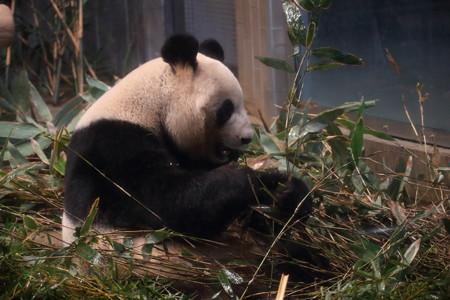 上野動物園105